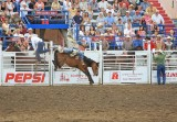 Horse Giving Cowboy  Flying Lessons