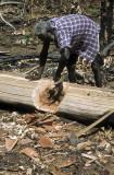 Goanna hunt, Tiwi Islands