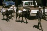 Mule train in Batopilas