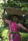 Rural woman, Rajasthan