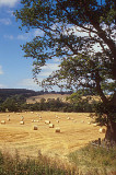 Summertime fields near Hadrians Wall