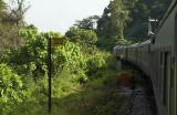 Train near Gua Musang