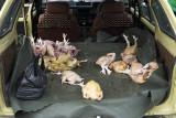 Backseat passengers, rural Kelantan
