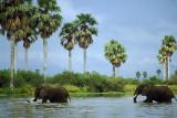 Elephants crossing the Rufiji