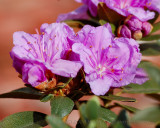 _20080501_17_Assorted Blossom.JPG