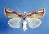 Ontario Papillons/Moths & Butterflies