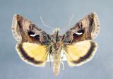 Newfoundland Labrador - Papillons - Moths & Butterflies