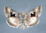 North West Territory Papillons/Moths & Butterflies