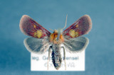 Quebec Papillons/Moths & Butterflies