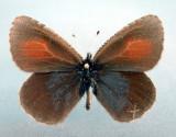 Yukon-Papillons/Moths & Butterflies