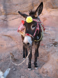'Laila' the donkey was all spruced up for the day.