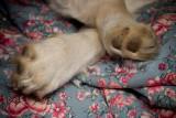 December 12th - Little Feet