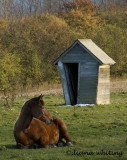 Horse and Shed
