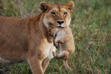 Day Twelve - Serengeti National Park