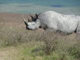 Day Eleven - Ngorongoro Crater
