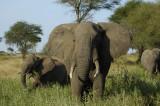 Arusha & Tarangire, June 01, 2006