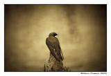 Hirondelle du passé - Swallow of the past
