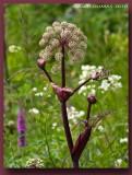 Fleurs Sauvages - Wild Flowers