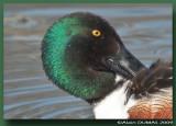 Portraits d'oiseaux - Birds Portraits