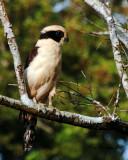 Veracruz birds