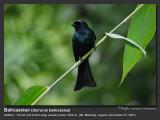 Balicassiao-IMG_5891.jpg
