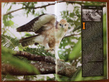Pages 124-125 of the EOS 7D Digital SLR Handbook features a short article about wild bird photographer Romy Ocon, plus a full-spread photo of a  Philippine Hawk-Eagle (Spizaetus philippensis, a Philippine endemic, immature) captured at Subic rainforest with a hand held 20D + 500 f4 IS + Canon 1.4x TC.