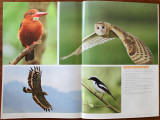 Pages 126-127 of the EOS 7D Digital SLR Handbook lists some bird photography tips from Romy Ocon, plus photos of (from  top left, clockwise) a White-throated Kingfisher, an Australasian Grass-Owl, a  Little Pied Flycatcher and a  Philippine Serpent-Eagle (all species and sub-species endemic to the Philippines). Shooting gear and information are available at the clickable links.