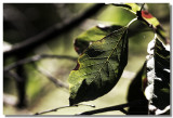 20081128 -- 135405 -- Canon 5D + Sigma 70 / 2.8 macro @ f / 4, 1/250, ISO 100