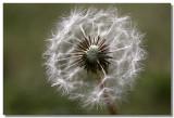 20090227 -- 142949 -- Canon 5D + Sigma 70 / 2.8 macro @ f/5.6, 1/250, ISO 100