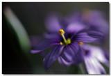 20090304 -- 144447 -- Canon 5D + Sigma 70 / 2.8 macro @ f/2.8, 1/200, ISO 100