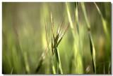 20090306 -- 163724 -- Canon 5D + Sigma 70 / 2.8 macro @ f/2.8, 1/1600, ISO 400