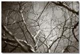 20090314 -- 135845 -- Canon 5D + 100 / 2 @ f/2, 1/8000, ISO 100