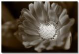 20090320 -- 135912 -- Canon 5D + Sigma 70 / 2.8 macro @ f/5.6, 1/200, ISO 200