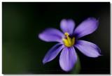 20090318 -- 134742 -- Canon 5D + Sigma 70 / 2.8 macro @ f/4, 1/200, ISO 200