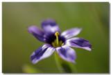 20090313 -- 160207 -- Canon 5D + Sigma 70 / 2.8 macro @ f/4, 1/250, ISO 100