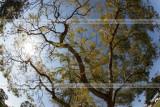 20100312 -- 144216 -- Canon 5D + 15 / 2.8 FE @ f/10, 1/320, ISO 100