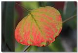 20050808 -- 8455.jpg  Canon 20D + 60 / 2.8 @ f / 4, 1/125, ISO 100