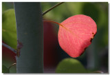 20050808 -- 8456.jpg  Canon 20D + 60 / 2.8 @ f / 4, 1/125, ISO 100