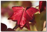 20051119 -- 1788.jpg  Canon 20D + 60mm / 2.8 macro @ f / 4, 1/125, ISO 100