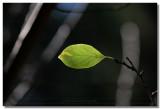 20070105 -- 9533.jpg  Canon 5D + Sigma 150mm / 2.8 macro @ f / 5.6, 1/200, ISO 100