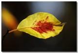 20070105 -- 9531.jpg  Canon 5D + Sigma 150mm / 2.8 macro @ f / 5.6, 1/400, ISO 100