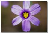 20070424 -- 132508  Canon 5D + Sigma 150/2.8 macro @ f/5.6, 1/125, ISO 100