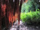San Francisco Botanical Garden, Golden Gate Park