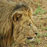 A Journey Into Awesome: The Pilanesberg Game Reserve             (10 Sub-galleries)