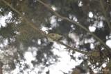 Aug-08 - Bird 005.jpg