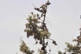 Aug-08 - Sparrows.jpg