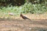 Aug-08-Bird 007.jpg