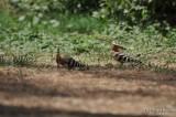 Aug-08-Bird 008.jpg