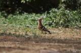 Aug-08-Bird 009.jpg
