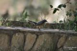 Aug-08-Bird 010.jpg